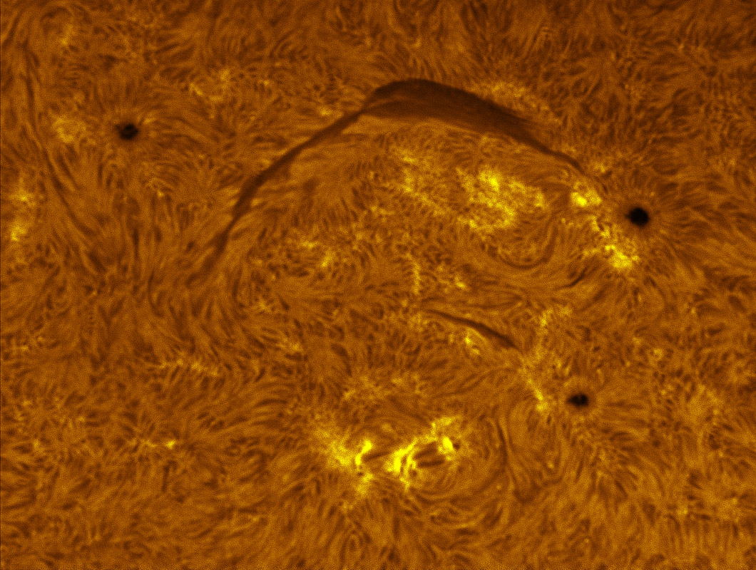 Sunspots 1341, 1342, and 1343 in h-alpha 11/13/2011